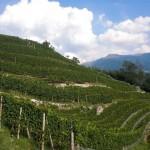 Weingarten Sommer