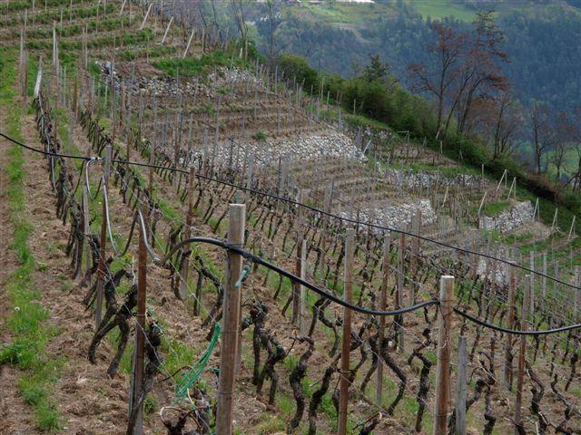 Weingarten Frühjahr