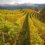 Villscheider Weingarten Herbst